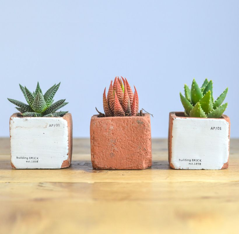 Fresh Succulent - Brick