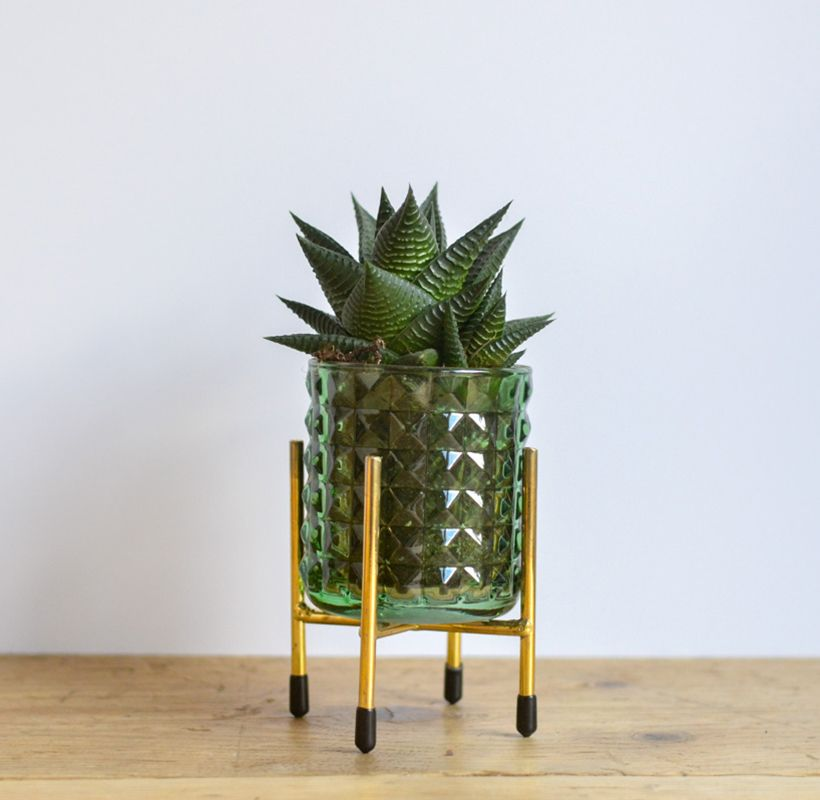 Fresh Succulent - Glass stand